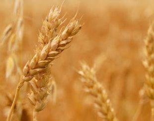 فروش ویژه پروتئین های جوانه گندم-شیر-ابریشم-کلاژن و کراتین هیدرولیز شده